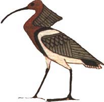 The Akh represented as a bird